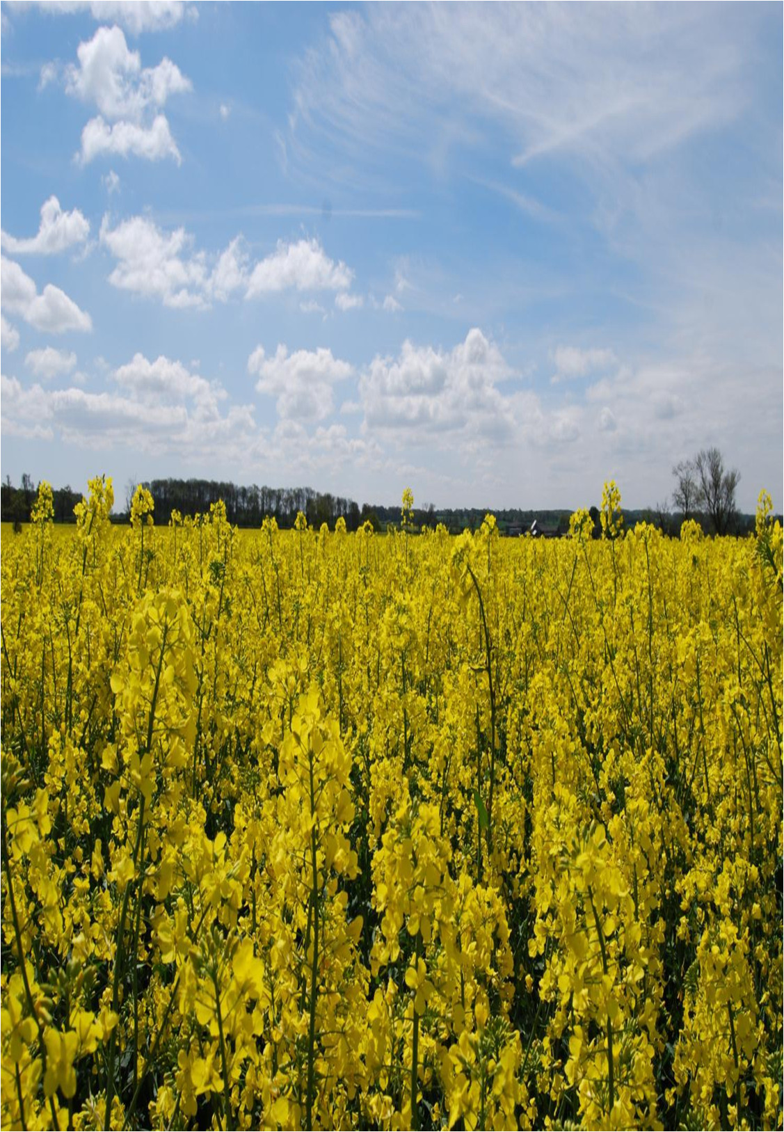 Best practice agronomy for cereals and oilseed rape course image