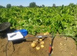 Improving potato yields and profitability by measuring and monitoring performance course image