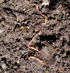 Improving soil biology for better yields course image