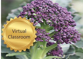 Advanced crop management of vegetable brassicas course image